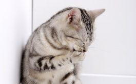 Nổi mề đay mẩn ngứa do mèo