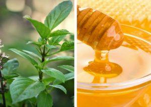 dùng húng quế kết hợp mật ong khi da mặt ngứa và sần