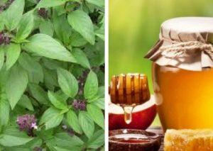 mật ong và húng quế giảm ngứa da