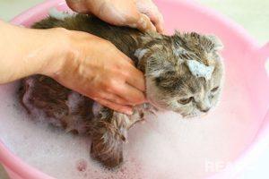vệ sinh lông mèo thường xuyên