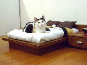 dành không gian riêng cho mèo